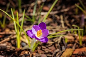 First Sign of Spring
