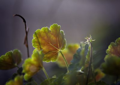 Nature Collection | Photography