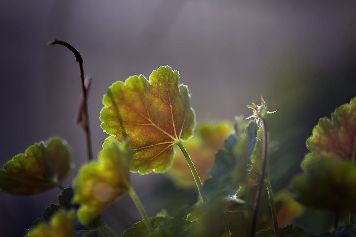 Sunlit Leaf-Nature Photography
